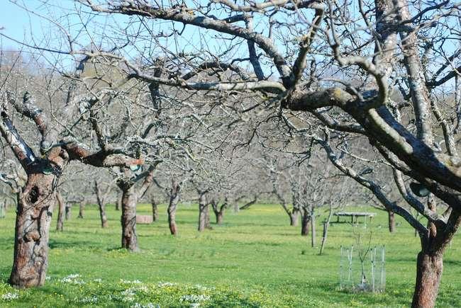Уход за яблоней весной в Апреле