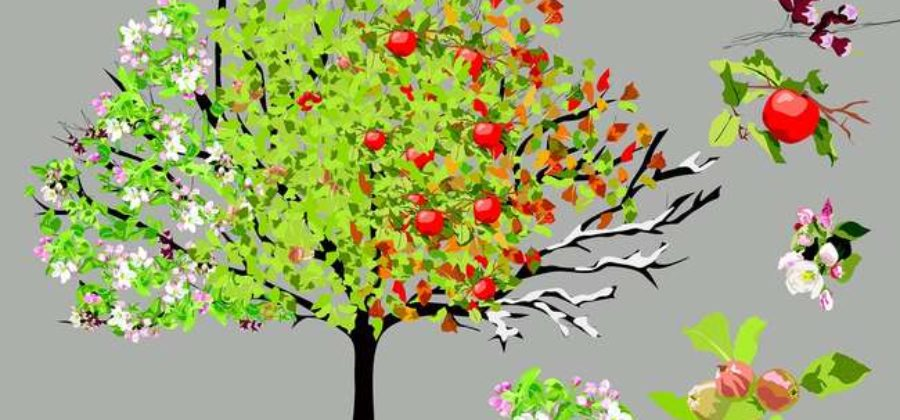 Уход за яблоней по месяцам