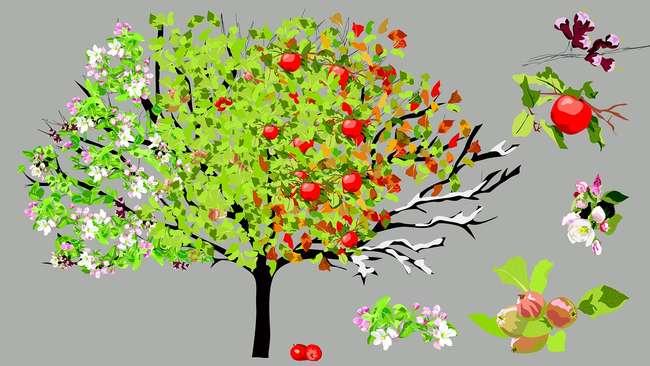 Уход за яблонями круглый год