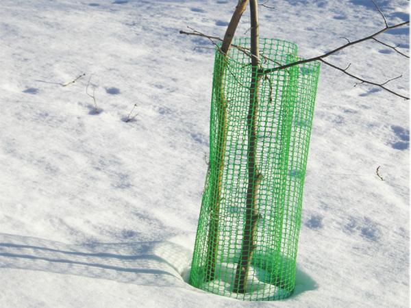 Защита ствола яблони от грызунов