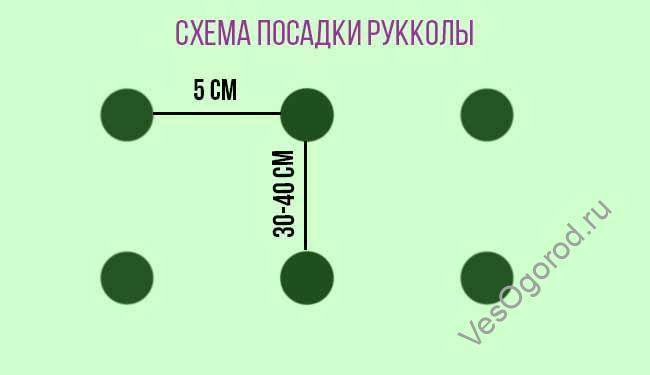 Схема посадки Рукколы