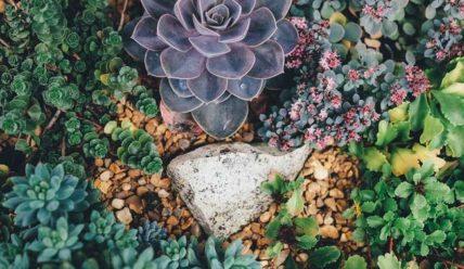 Суккуленты для сада: фото, названия и уход