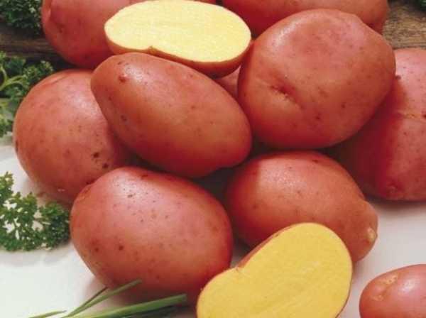 Описание ранних сортов картофеля – Алена
