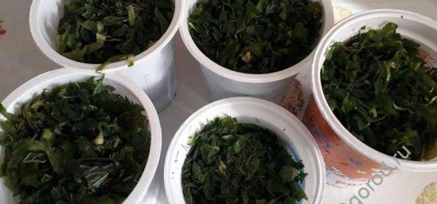 Как заморозить зелень в морозилке