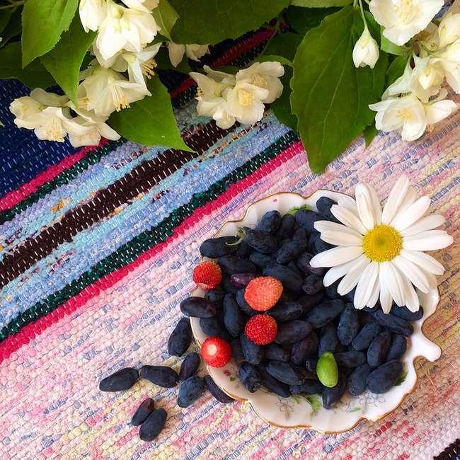Что приготовить из ягод жимолости садовой