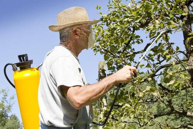 Внекорневая подкормка яблони