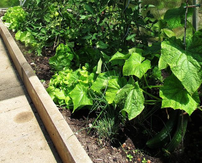 Как подготовить землю под теплую грядку с осени