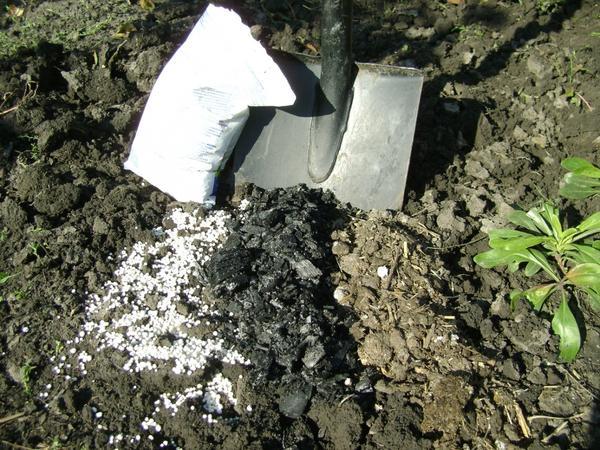 Минеральные и органические удобрения для огурцов