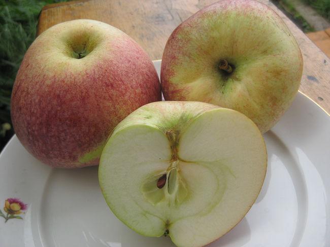 Плоды сорта Конфетное2