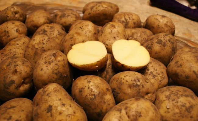 Описание сорта картофеля Бельмондо