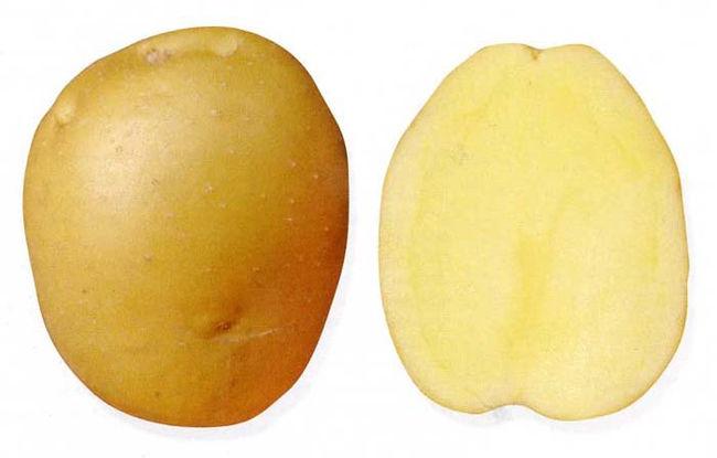 Характеристика клубня картофеля сорта Брянский деликатес