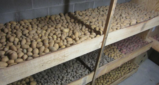 Хранение урожая картошки