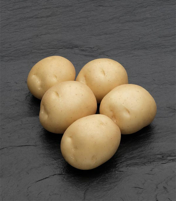 Описание картофеля Сифра