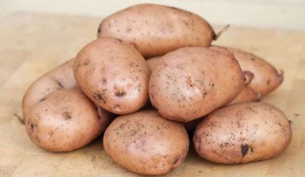 Описание сорта картофеля Жуковский, отзывы, фото