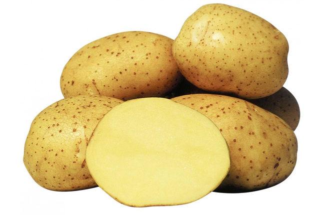 Описание сорта картошки Колетте