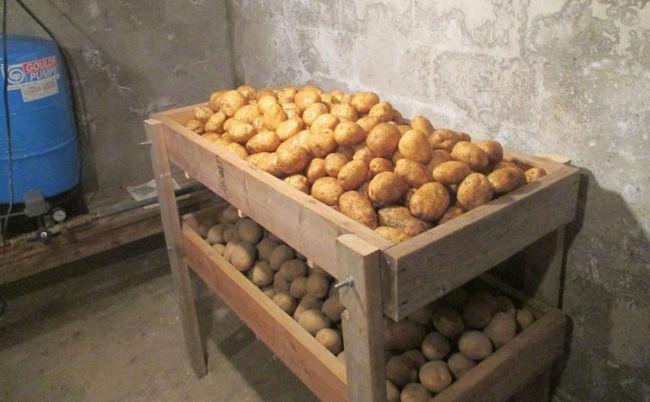 Сбор и хранение урожая Колетте