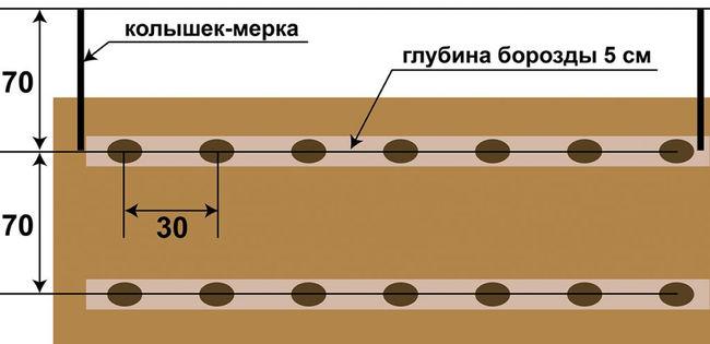 Схема посадки картофеля в борозду
