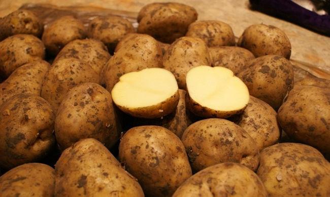 Характеристика клубней картофеля Ривьера