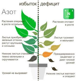 Избыток Азота для растений