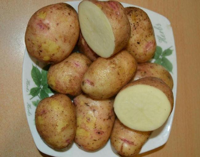 Картофель Аврора в разрезе