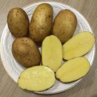 Картофель Бриз: описание сорта, отзывы тех, кто сажал