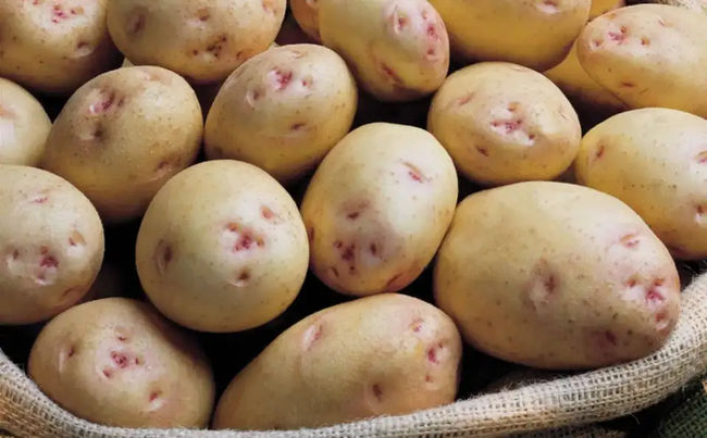 Клубни картофеля сорта Аврора