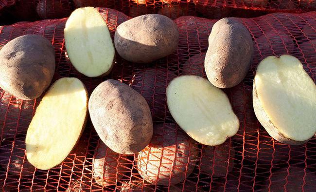 Описание картофеля Бриз