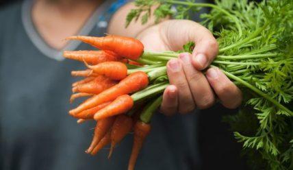 Что делать если морковь плохо растет – Чем обработать для хорошего роста моркови