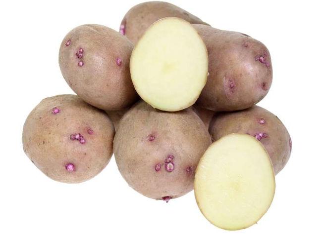 Сорт картошки Аврора