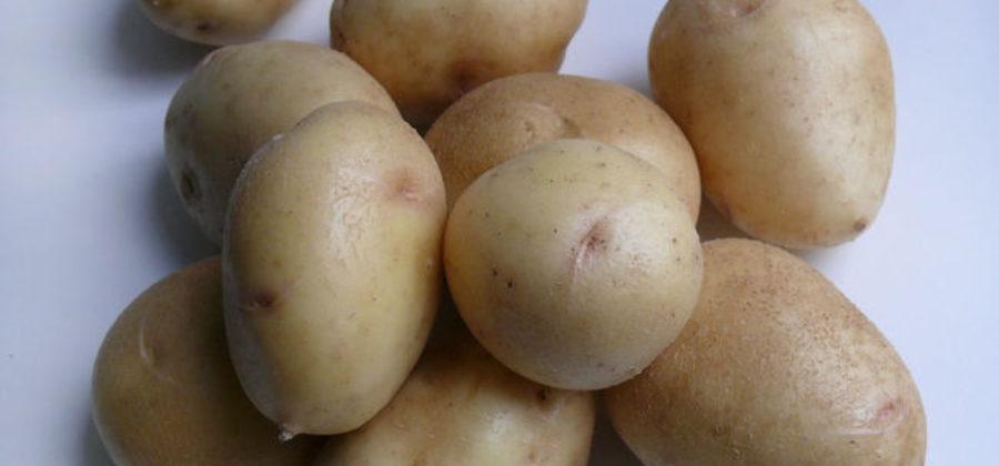 Характеристика сорта картофеля Невский – Отзывы о сорте Невский