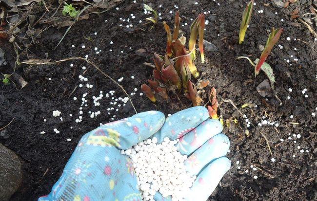 Что делать если растение повреждено возвратными заморозками