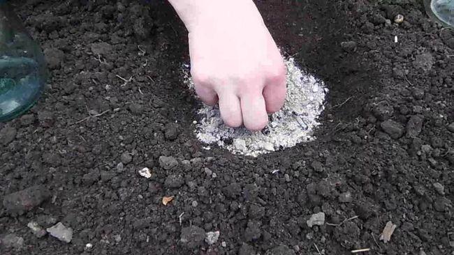 Как посадить семена кабачков