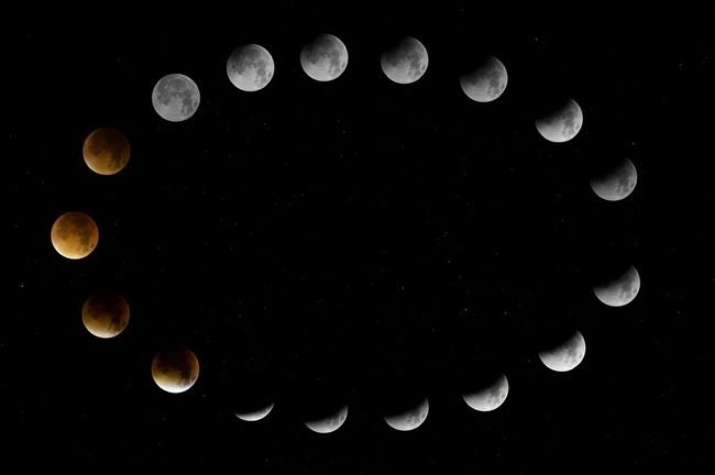 Когда сеять петрушку по лунному календарю