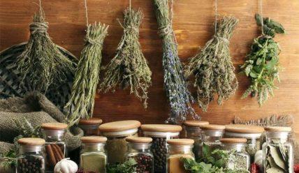 Использование народных средств против вредителей сада и огорода