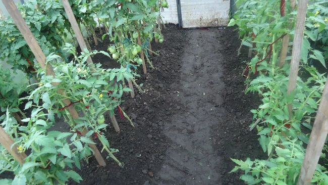 Окучивание помидор для урожая