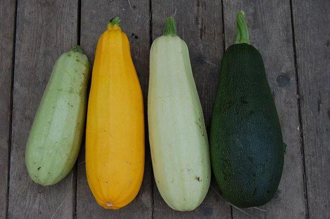Сорта кабачков для выращивания в открытом грунте