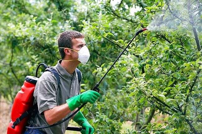 Мочевина для опрыскивания деревьев