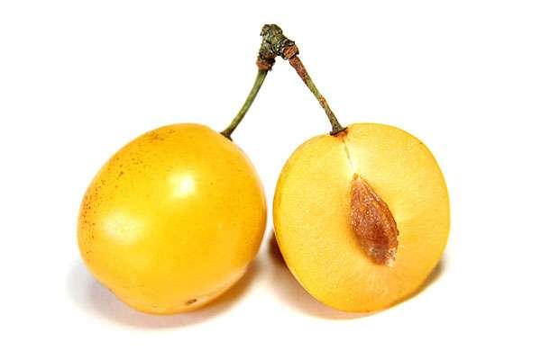 Описание плодов медовой сливы