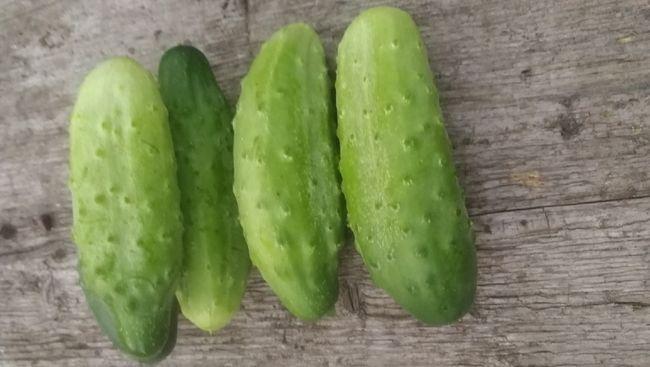 Описание плодов сорта Неженский