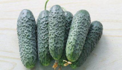 Огурцы Амур: описание сорта и отзывы
