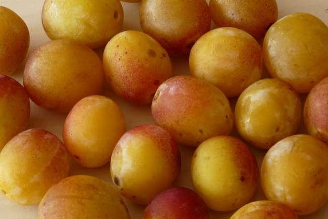 Урожайность сливы желтой медовой