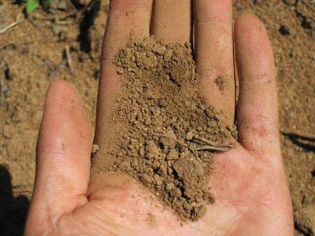 Внесение сульфата аммония на глинистых почвах