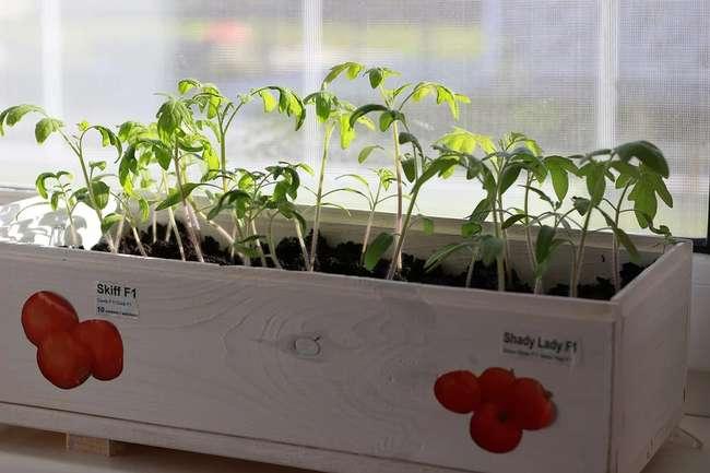 Монофосфат калия для рассады томатов