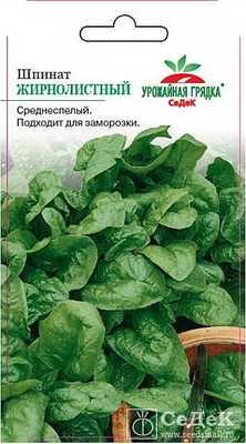 Сорт шпината Жирнолистный