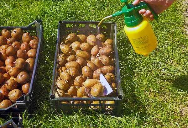 Химические средства для опрыскивания картофеля