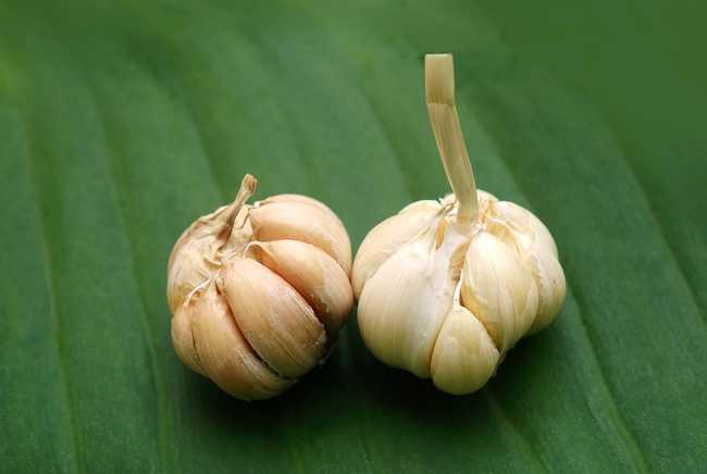 Настой чеснока против фитофтороза