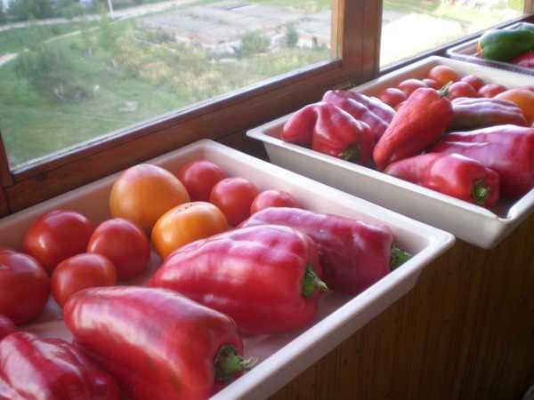 Особенности хранения перцев на балконе