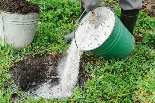 Как зола в огороде влияет на почву