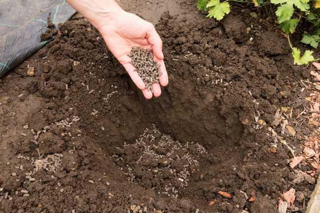Влияние куриного помета на почву