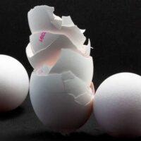 Как использовать яичную скорлупу на садовом участке